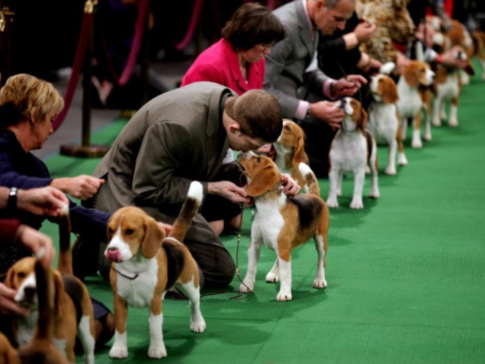 Со всей Сибири привезли лучших собак на Всероссийскую выставку в Кемерове