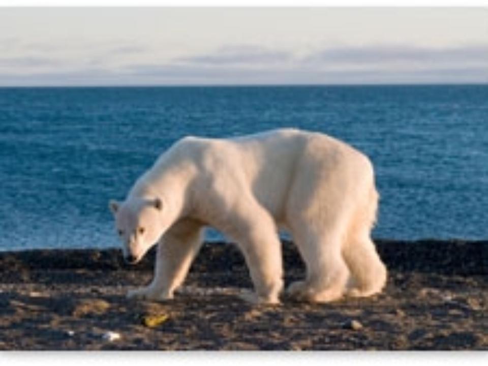 جفتري خرس قطبي Maddenin Tanecikli yapısı ve Isı Maddenin tanecikli yapısı geçen derslerimizde işlenmişti. Atom ve molekül tanecikleri aralarınd