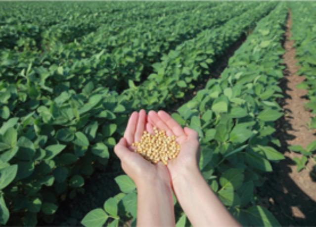 грамота работа технология выращивания сои в украине если вести речь