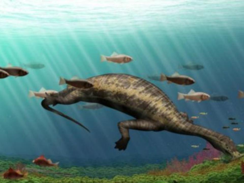 Морского динозавра-вегетарианца обнаружили вКитайской народной республике учёные