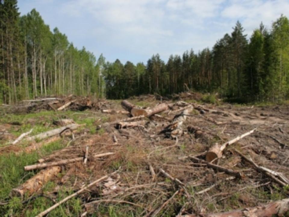 ВЕАО чиновники отдали китайцам неменее 1,8 тыс. гектаров заповедных земель