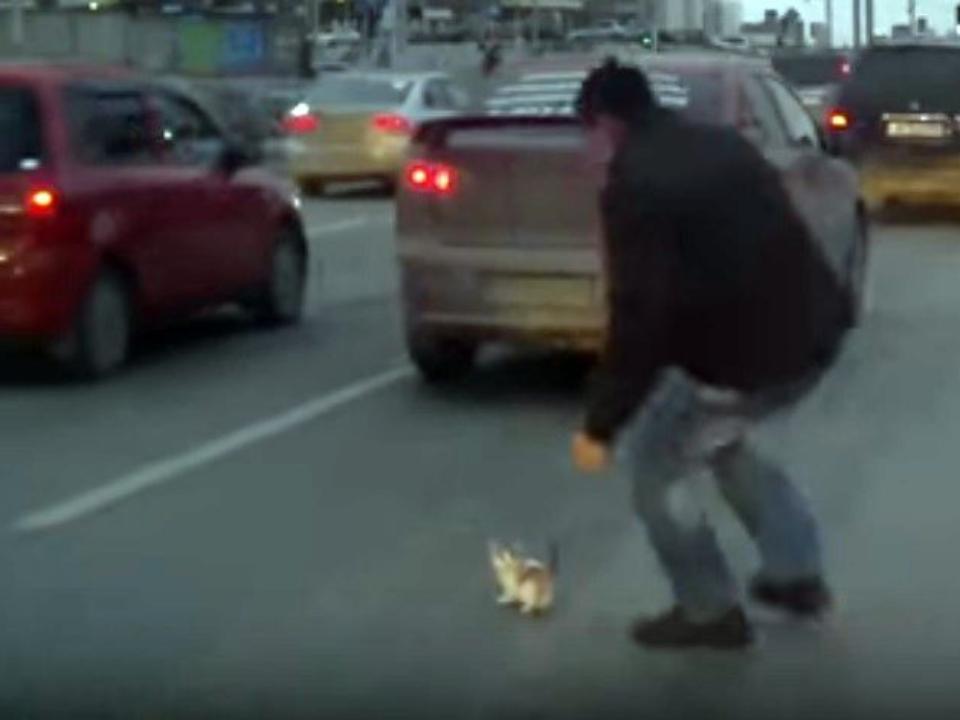 ВНовосибирске шофёр извлек котенка из-под колеса засекунду дотрагедии