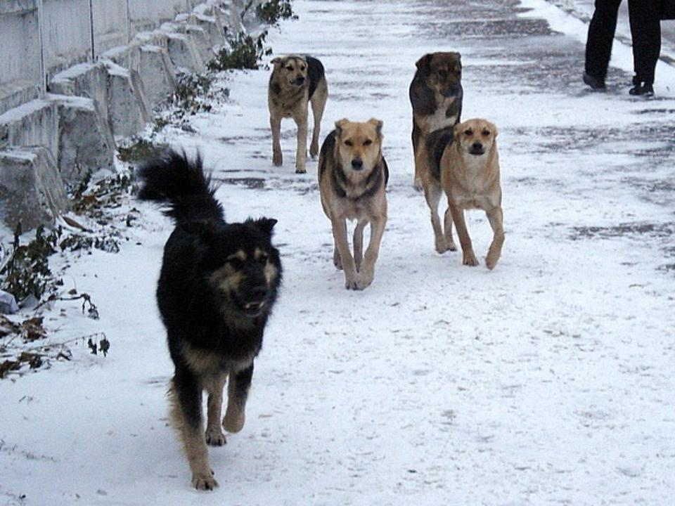 Девушка-дворник вПриангарье спасла школьника отстаи собак