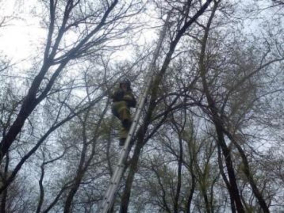 ВТомске возбудили дело обуроке физкультуры влесу