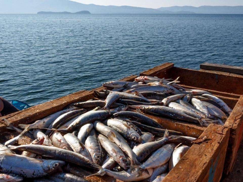 ВБаргузинском заливе наБайкале задержали группу браконьеров