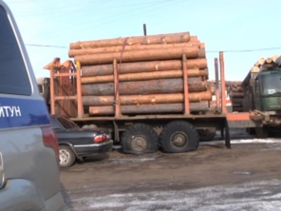 ВКуйтунском районе задержана группа незаконных лесорубов