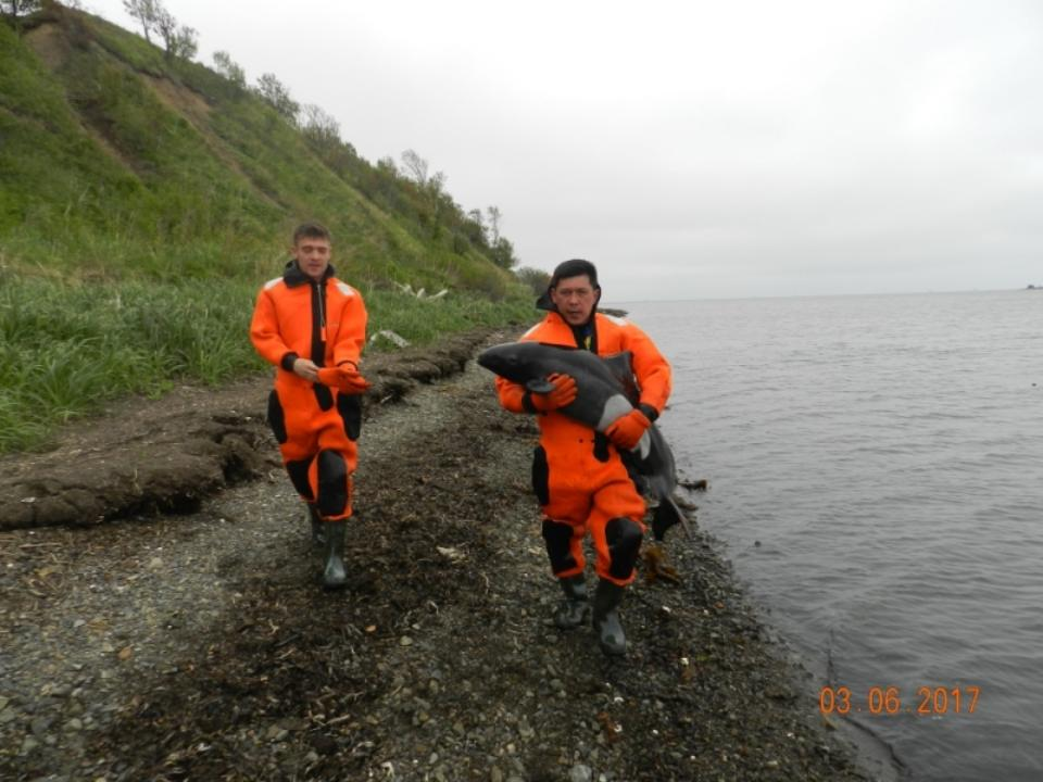 Дельфина, оказавшегося наотмели, спасли наюге Сахалина