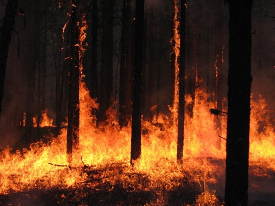 Площадь пожаров вИркутской области завыходные сократилась вдвое