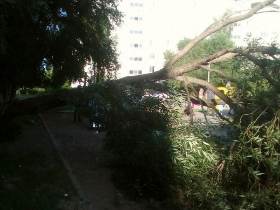 ВОмске надетскую площадку упало старое дерево: пострадал ребёнок