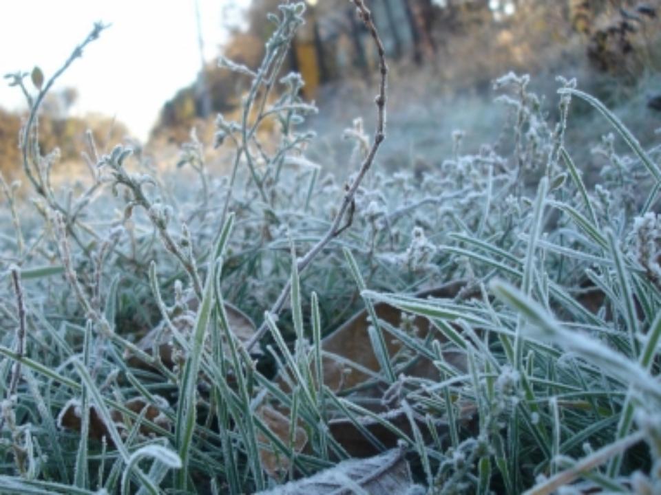 ВОмской области ожидаются заморозки до-7