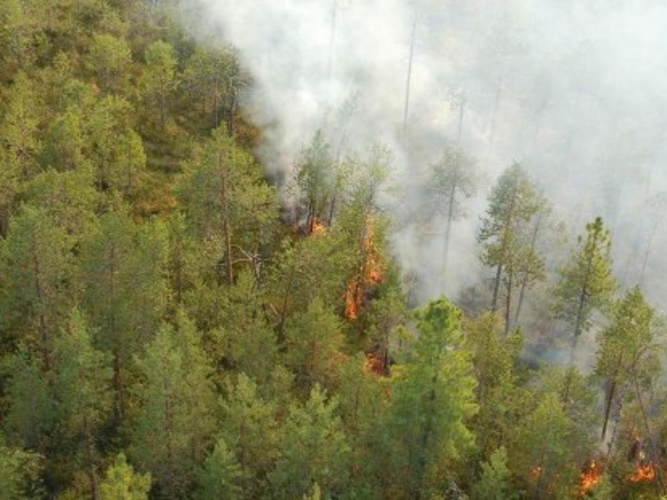 Лесными пожарами в РФ охвачено 63,4 тыс. га