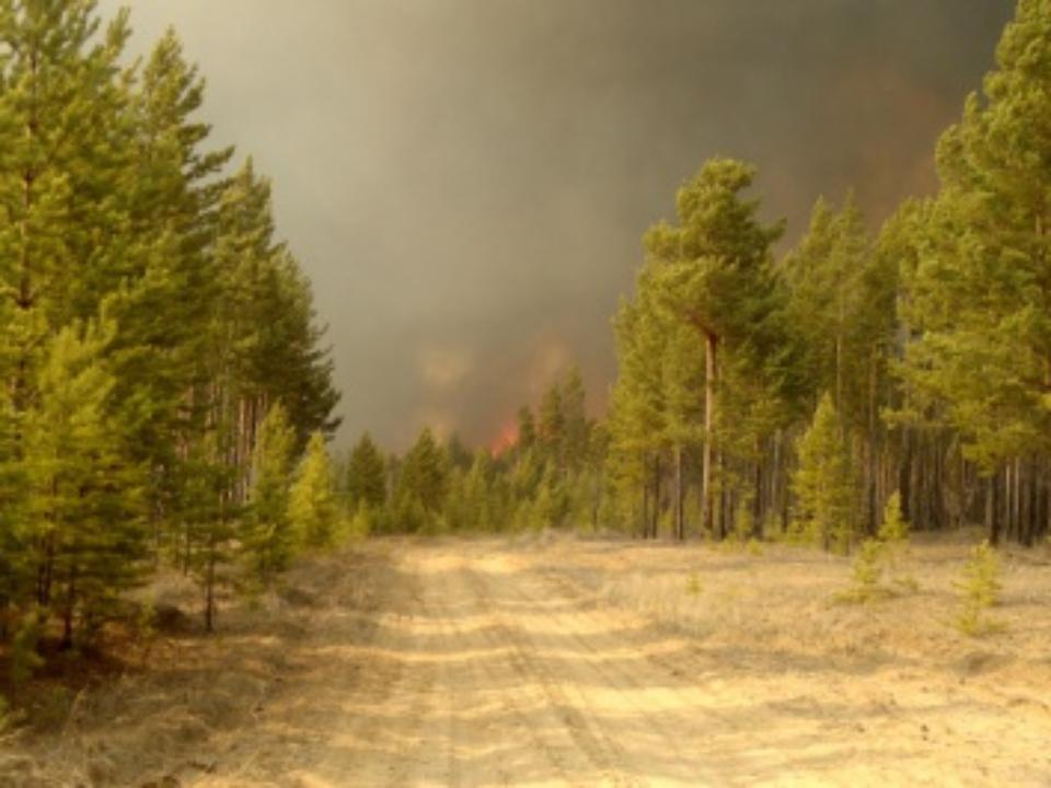 Лесными пожарами в Российской Федерации  охвачено 63,4 тыс. га