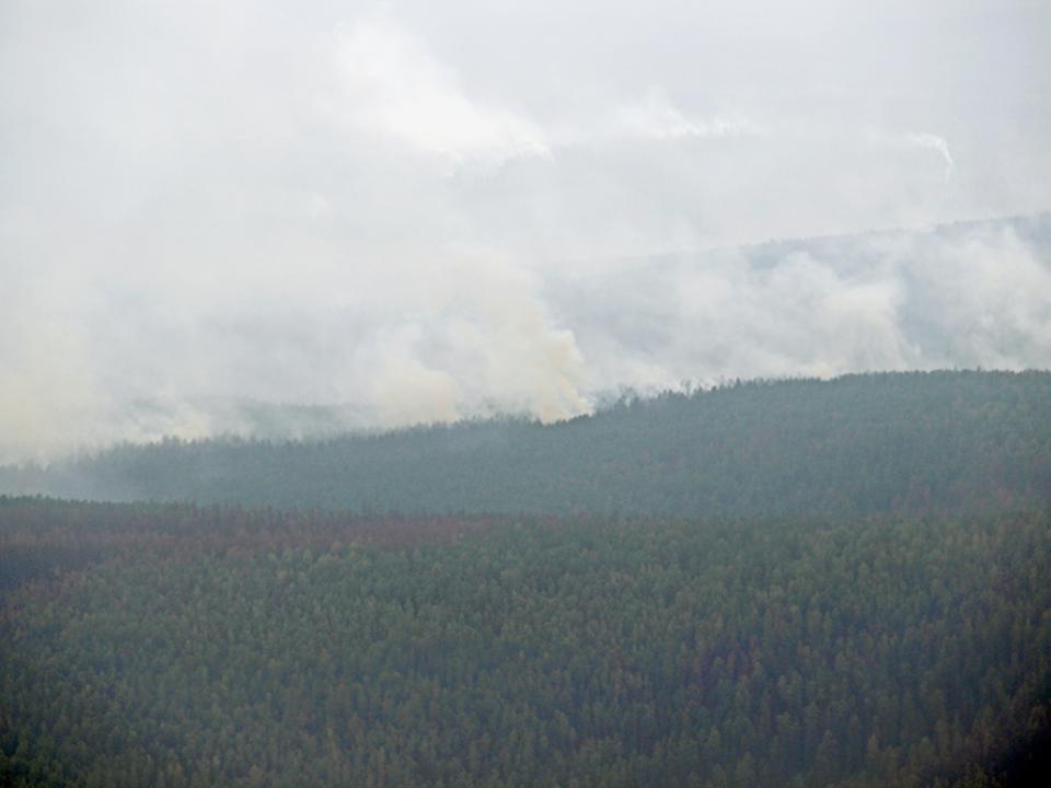 За минувшие сутки в Российской Федерации потушили 29 лесных пожаров