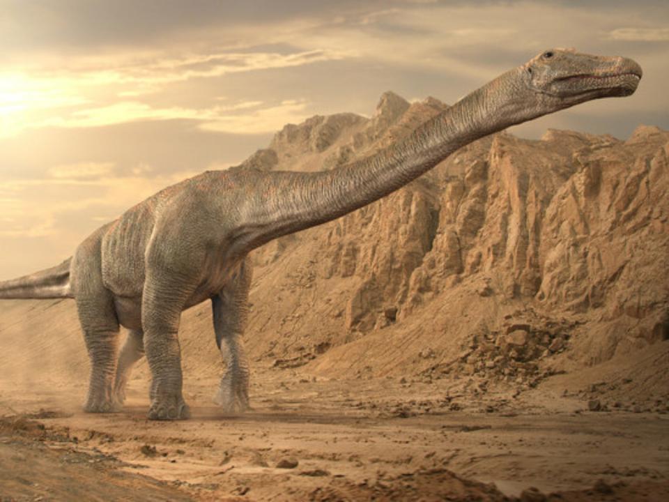 Кость 20-метрового динозавра нашли в Бурятии